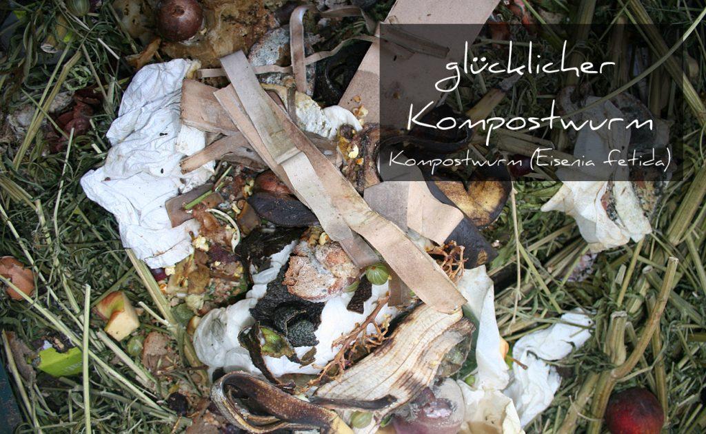 gluecklicher-Kompostwurm1300x800