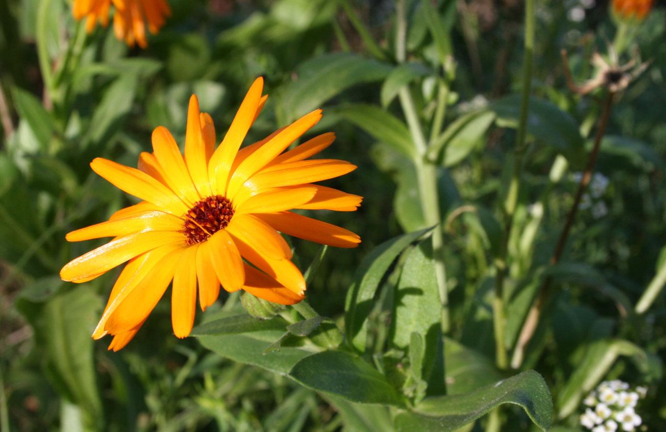 Seedballs ringelblume da erdwurm for Fruchtfliegen in erde